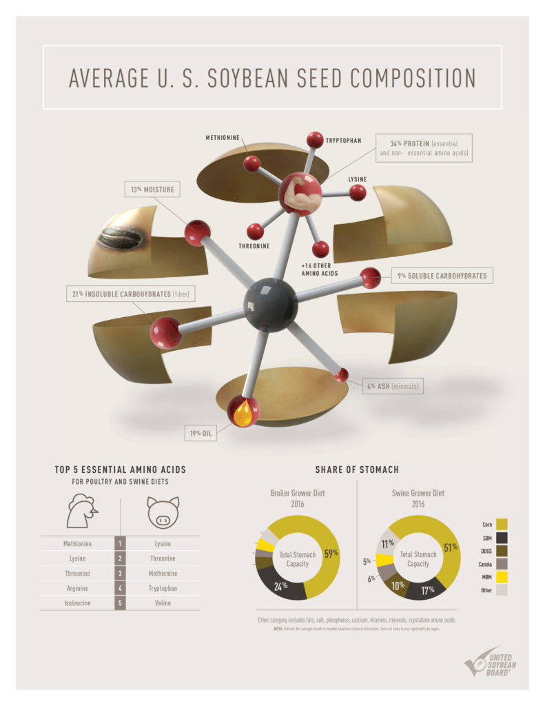 What's in a Soybean Infographic